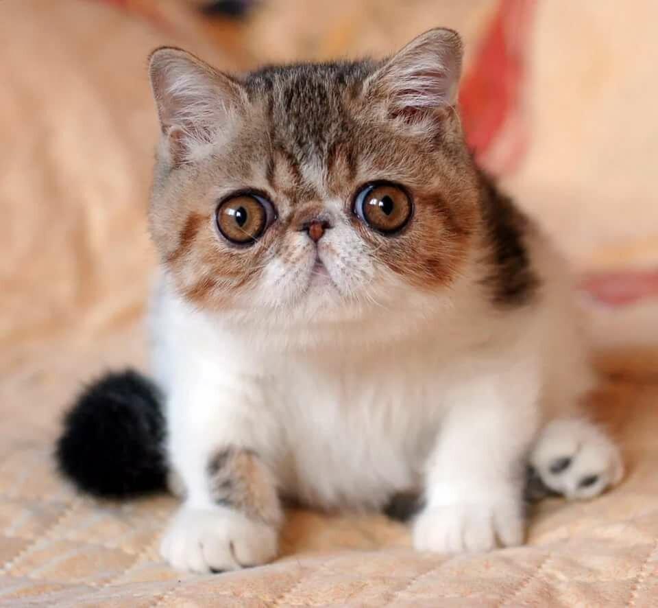 Шаурма из кошки фото сих