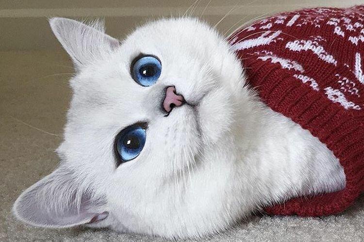 фото кошек красивых с большими глазами самом