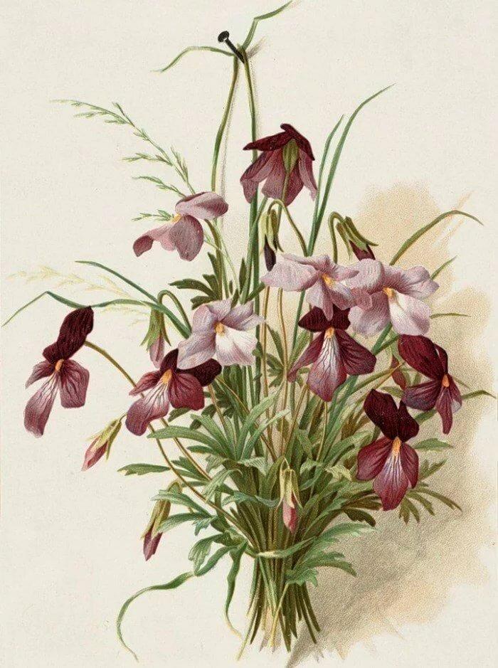 Системный администратор, открытки ботаника