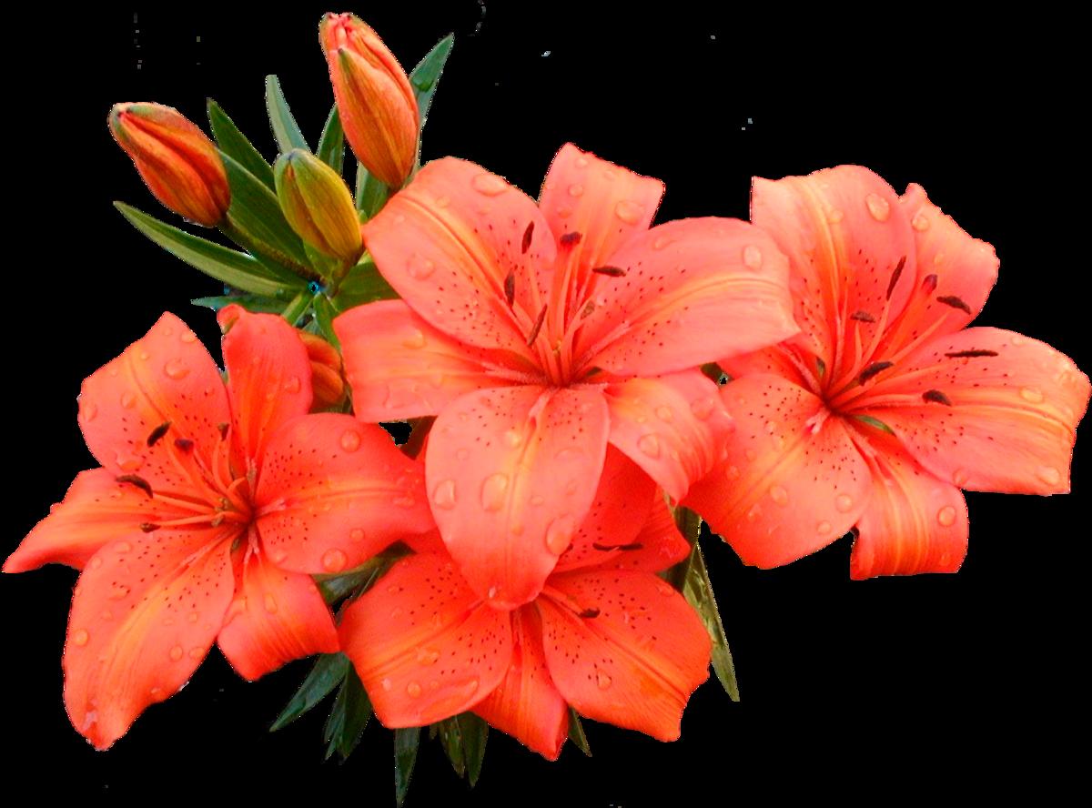 token__ flowers custom pic 1