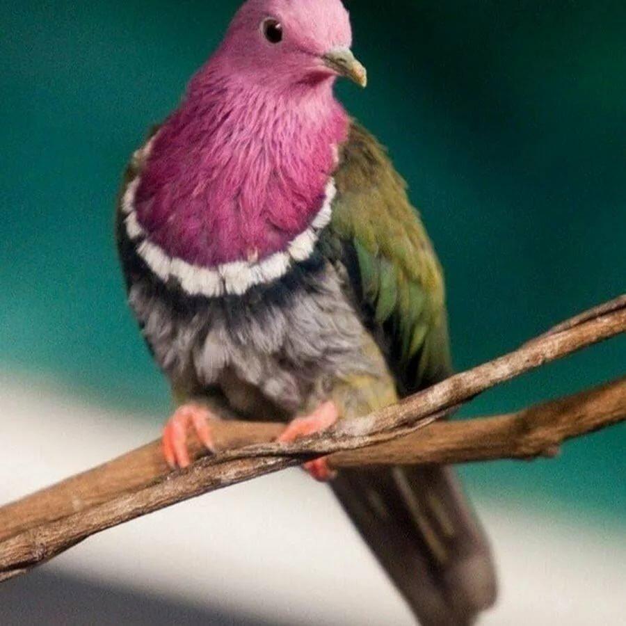 Картинки необычные голуби