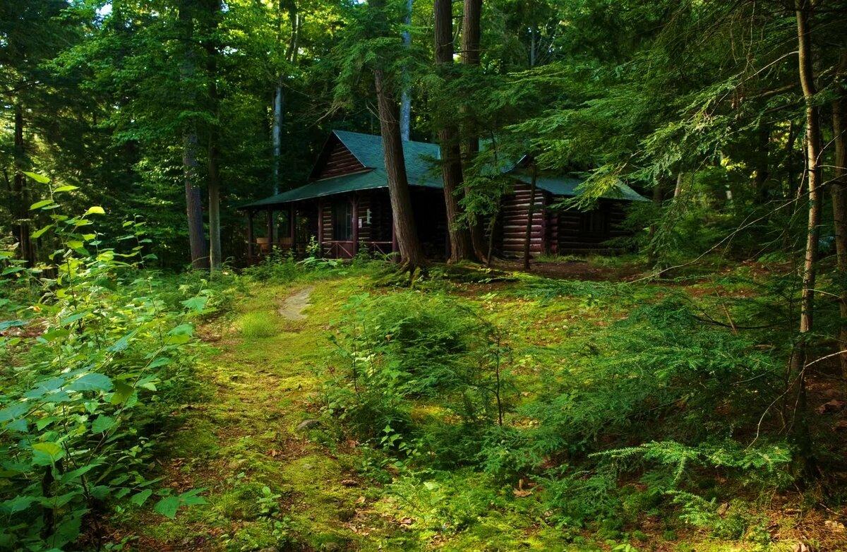 Отправить поздравительную, картинки дом в лесу летом