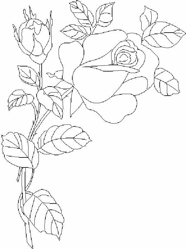 Рисунки цветов карандашом на открытке, открытку февраля