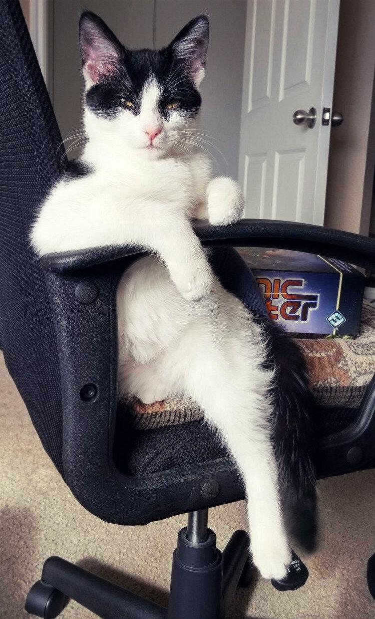 живность,котэ,прикольные картинки с кошками