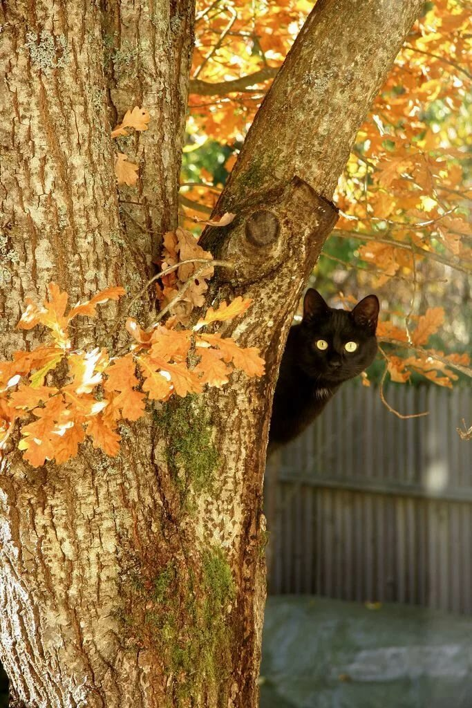 Black Cat with gold eyes bends in with the Fall colors. Natura Смешные кошки, Котята и Кошки
