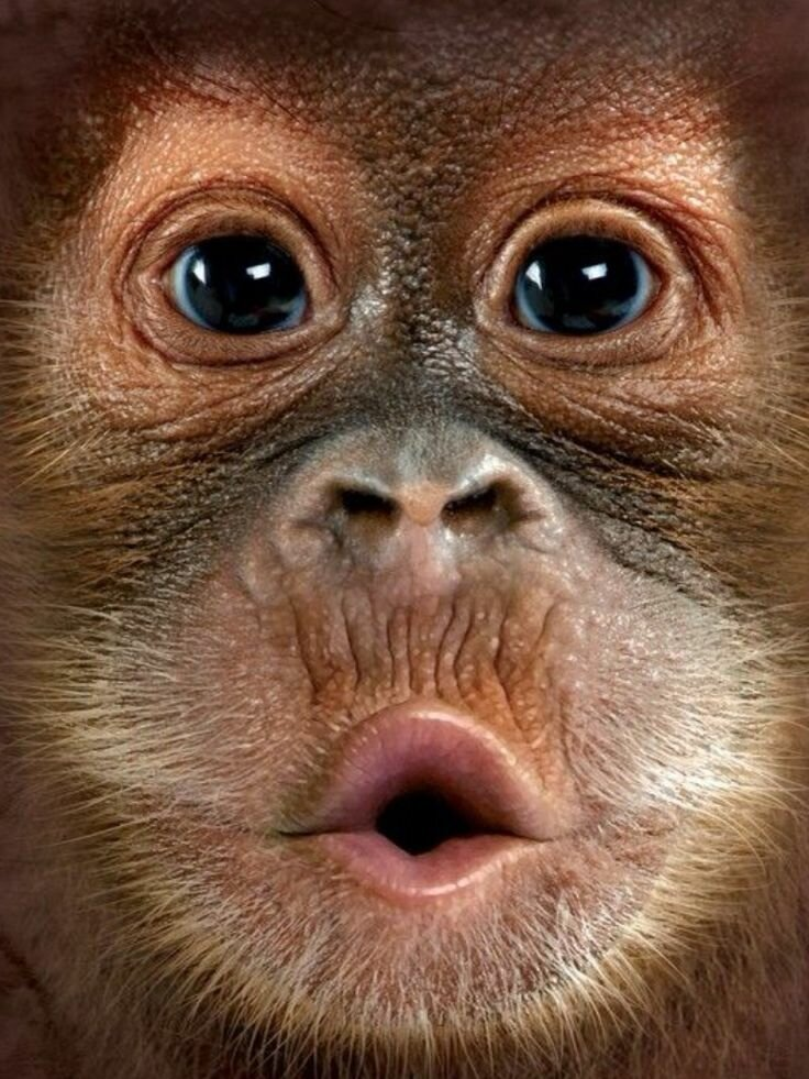 Рожи смешные картинки животных, днем рождения яну