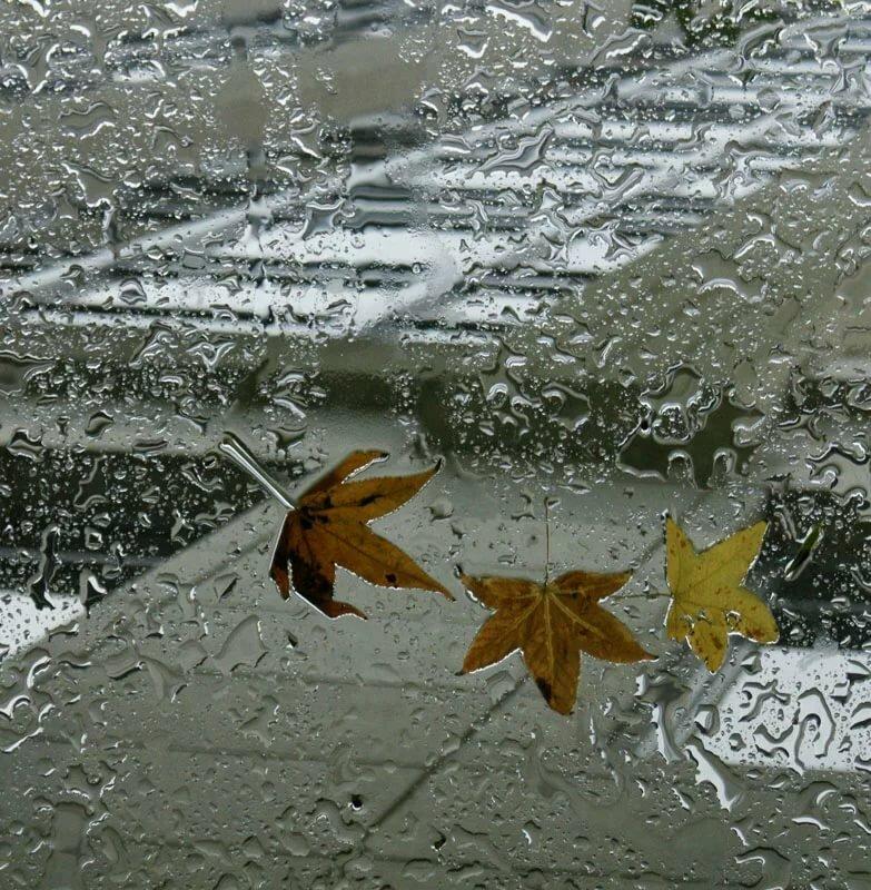 Гифки шевелящиеся картинки осенний дождь