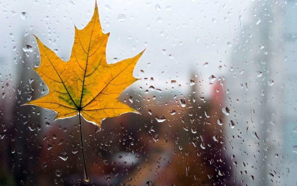 Блестящие, открытки дождливой осени