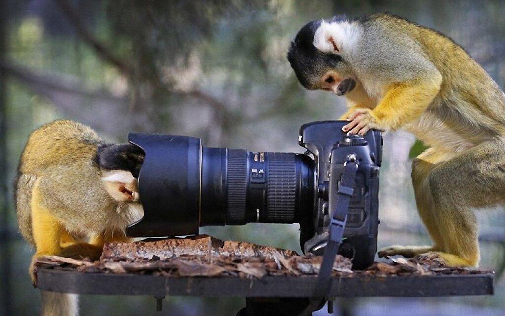 Прикольные картинки про работу с животными, словом