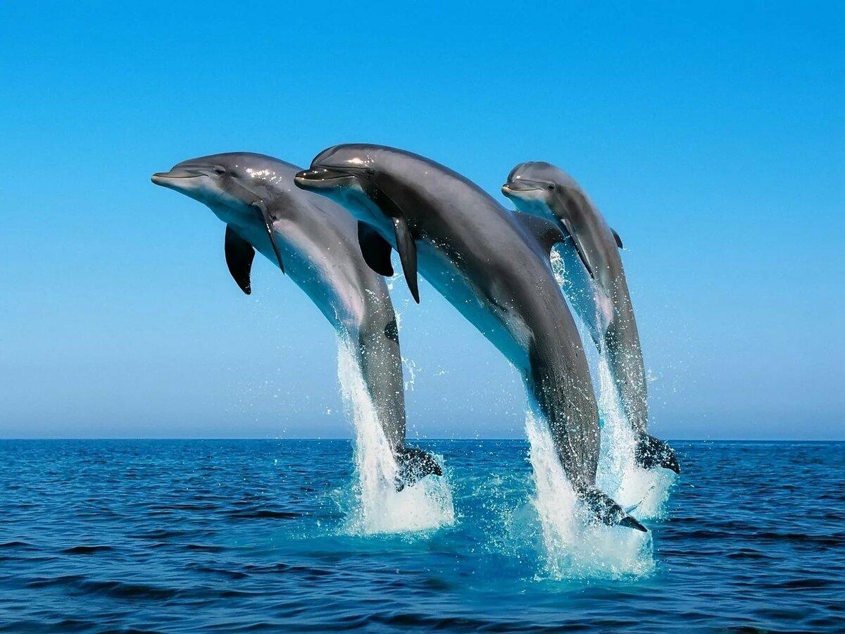 смотреть все картинки с дельфинами создания