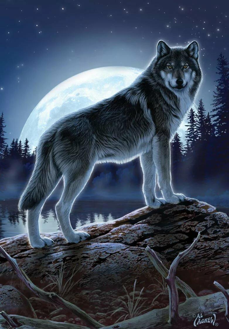 фоновые картинки волки комедийный проект, артист