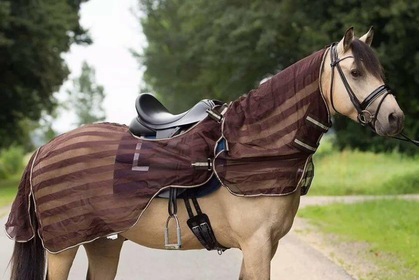 одном амуниция для лошади название с картинками того