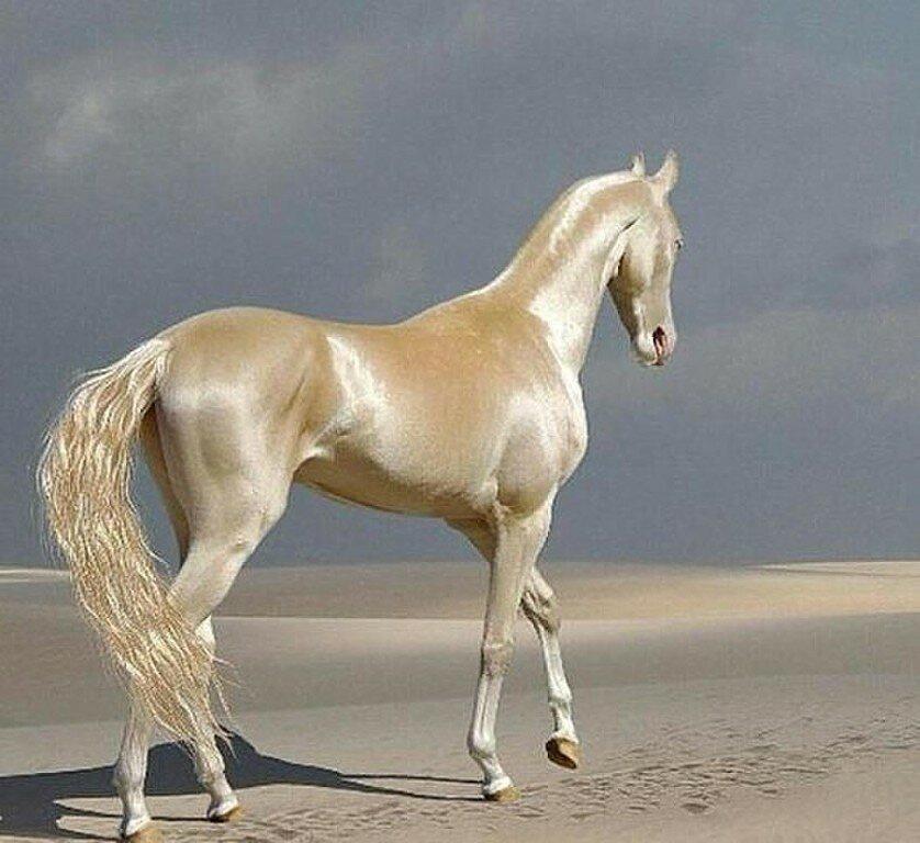 даже фото бежевых коней может сказать что