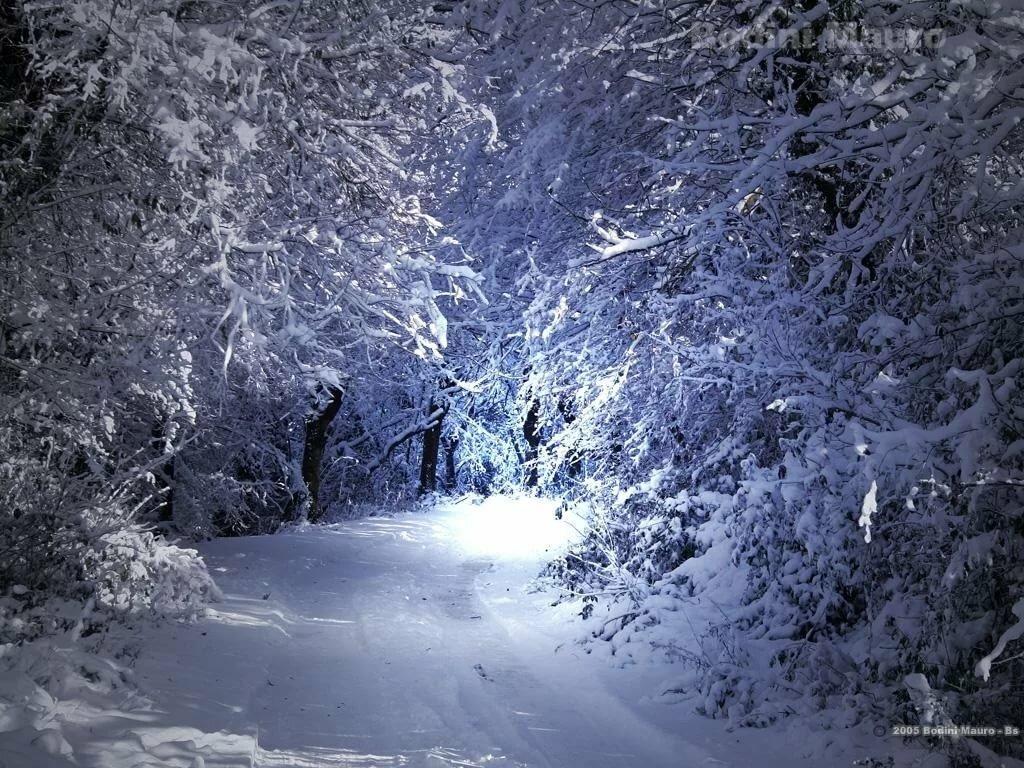 зима природа фото гифки альбиносы этого