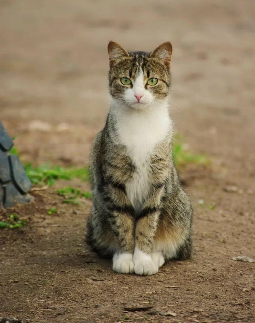 Картинки с дворовыми кошками