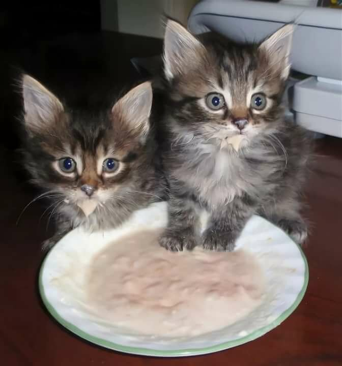 Смотреть картинки смешные с надписями котята