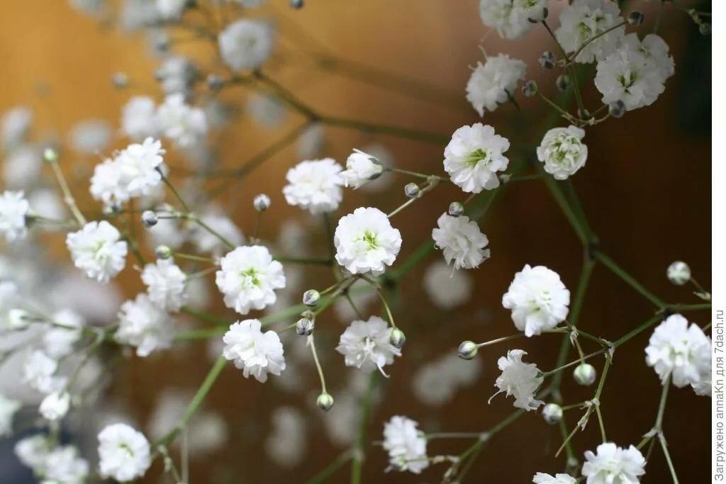Маленькие белые цветы для украшения букетов, черные