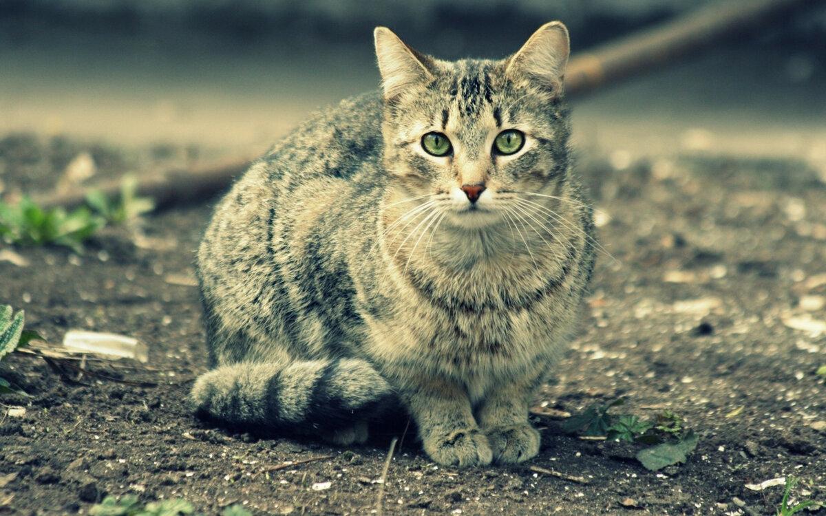 Юбилеем, кот на картинку