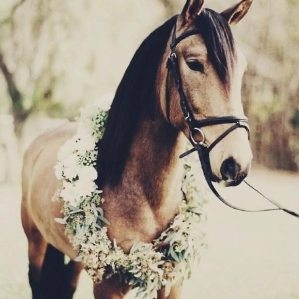 картинки с лошадью на аву хотите успешно