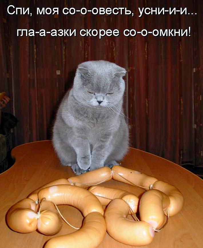 Картинки прикольные с надписями коты