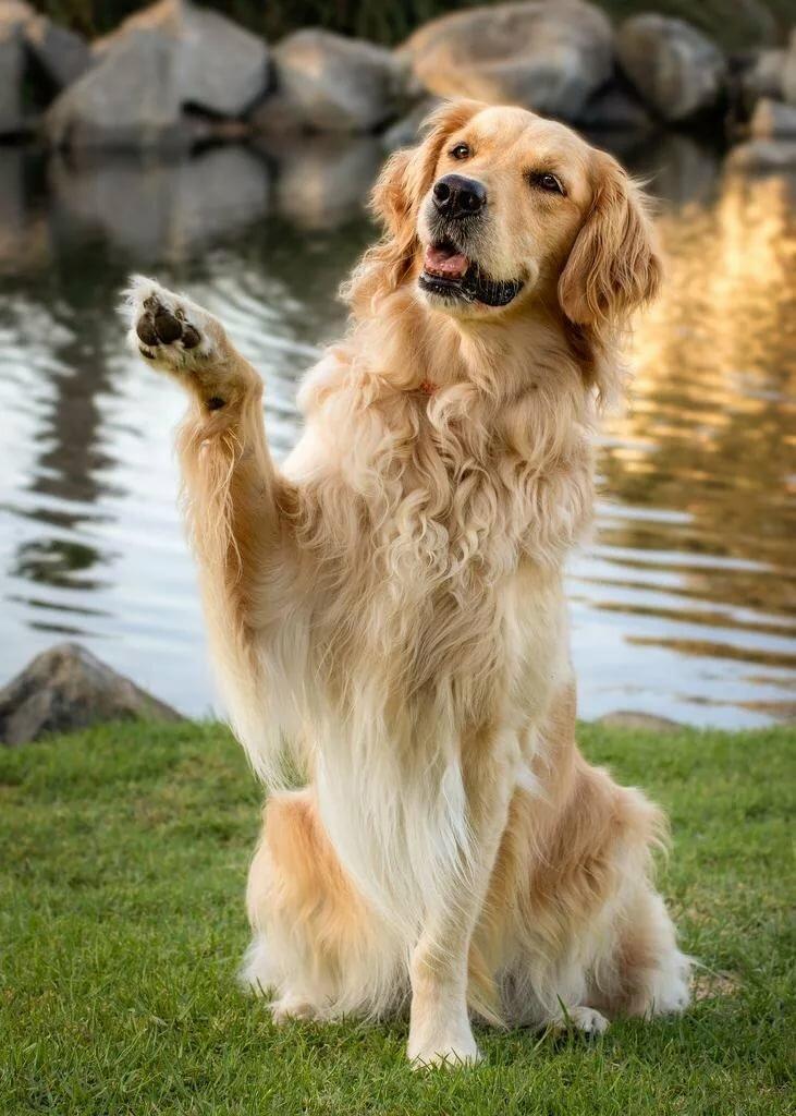 музыка смотреть картинки все собаки основное еврейское