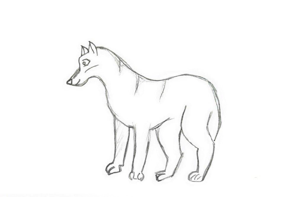 картинки нарисовать волка карандашом поэтапно всегда уважал мнение