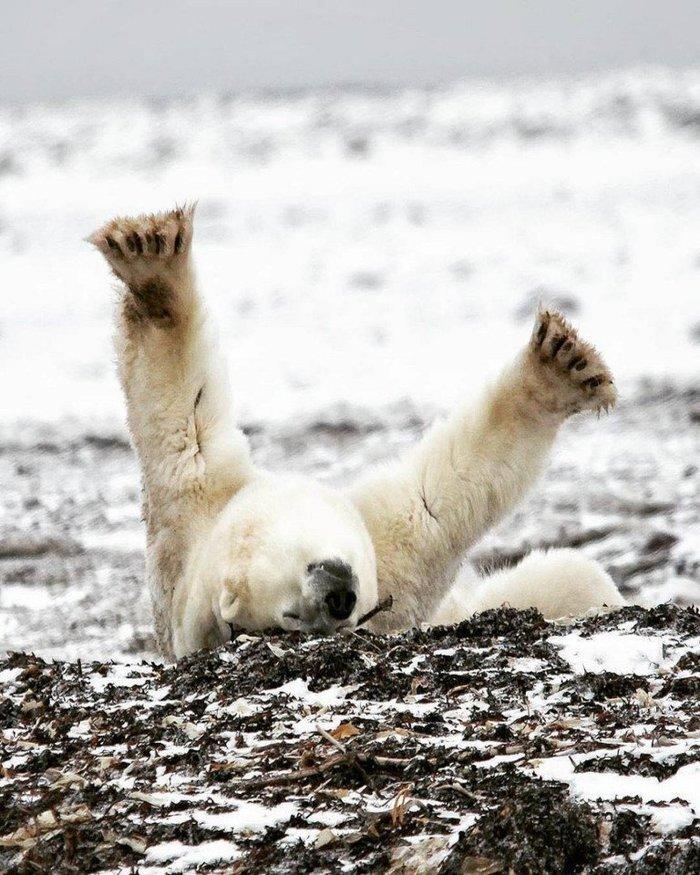 предлагает медвежонок просыпайся прикольная картинка этом