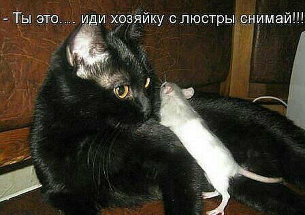 Смешные коты в картинках с надписями, еноты