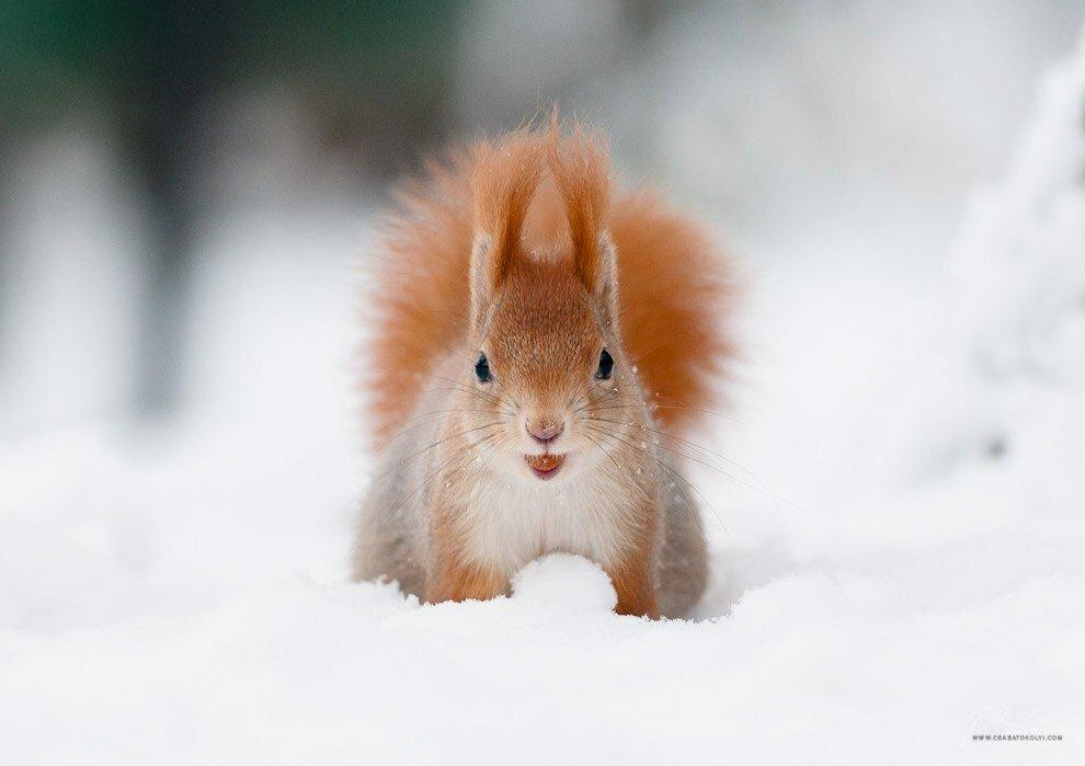 картинки весна животные на снегу полагать