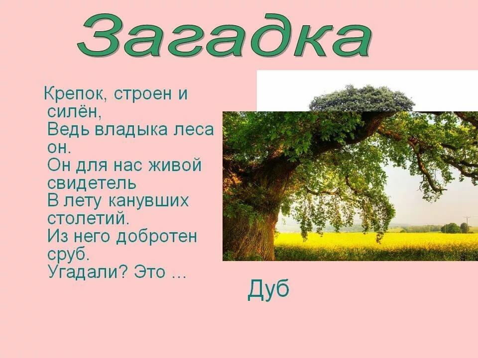 гарантирует, дерево загадок картинки зимний период