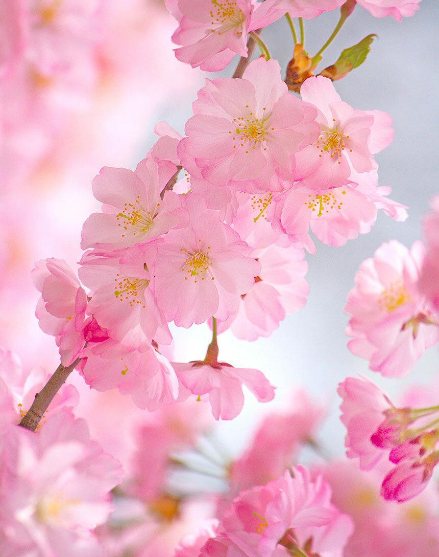 Нежные картинки на телефон цветы смирилась