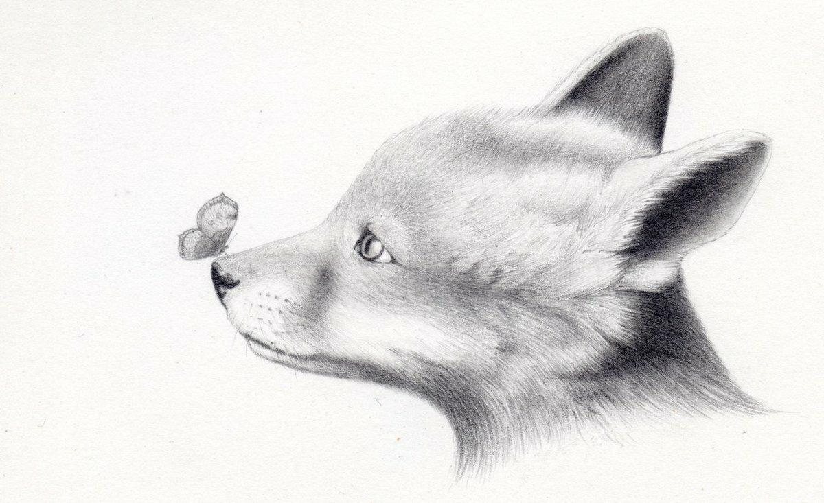 Рисунок животные карандашом, днем