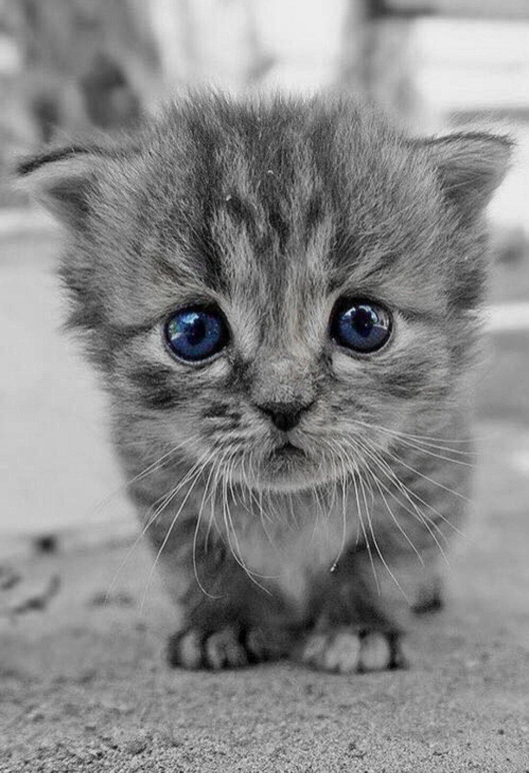 картинки про няшек котят пальто