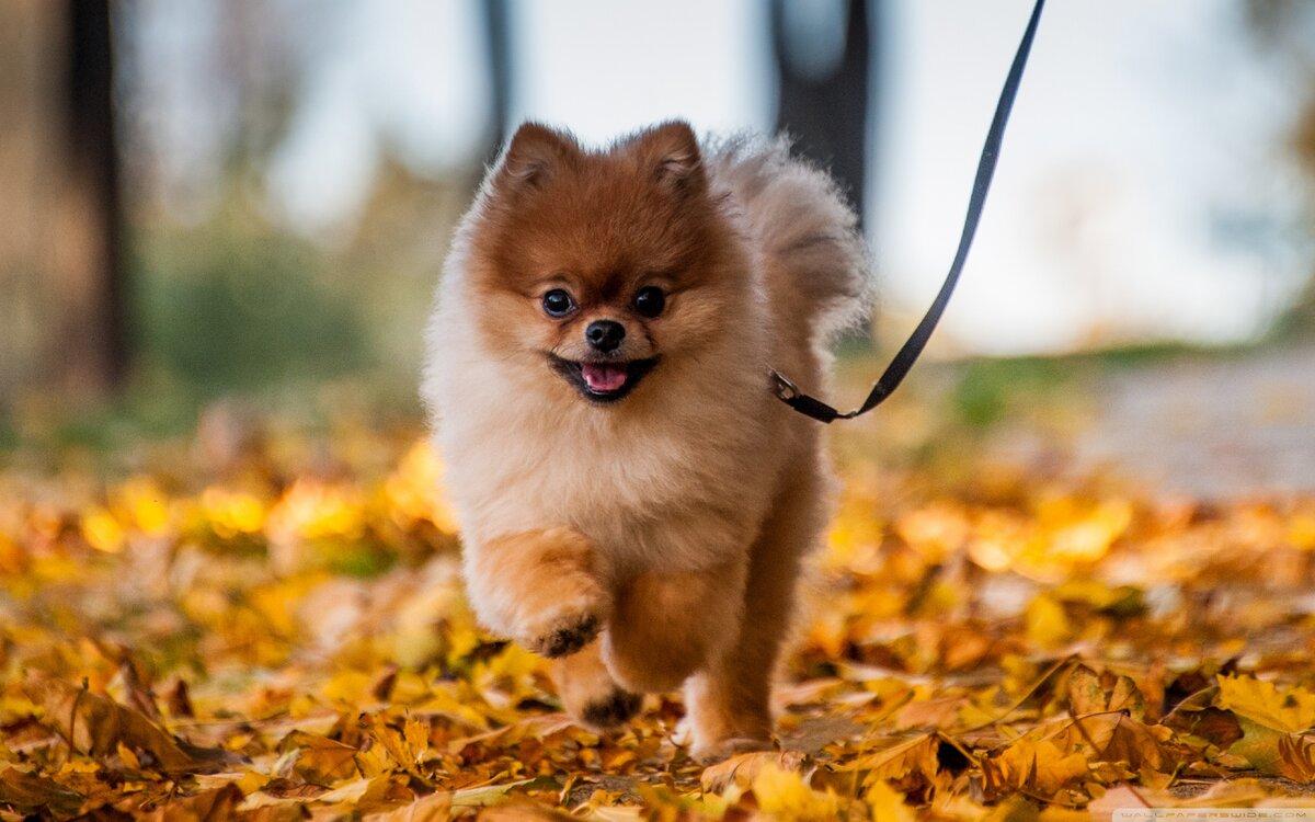Красивые картинки маленькие собачки