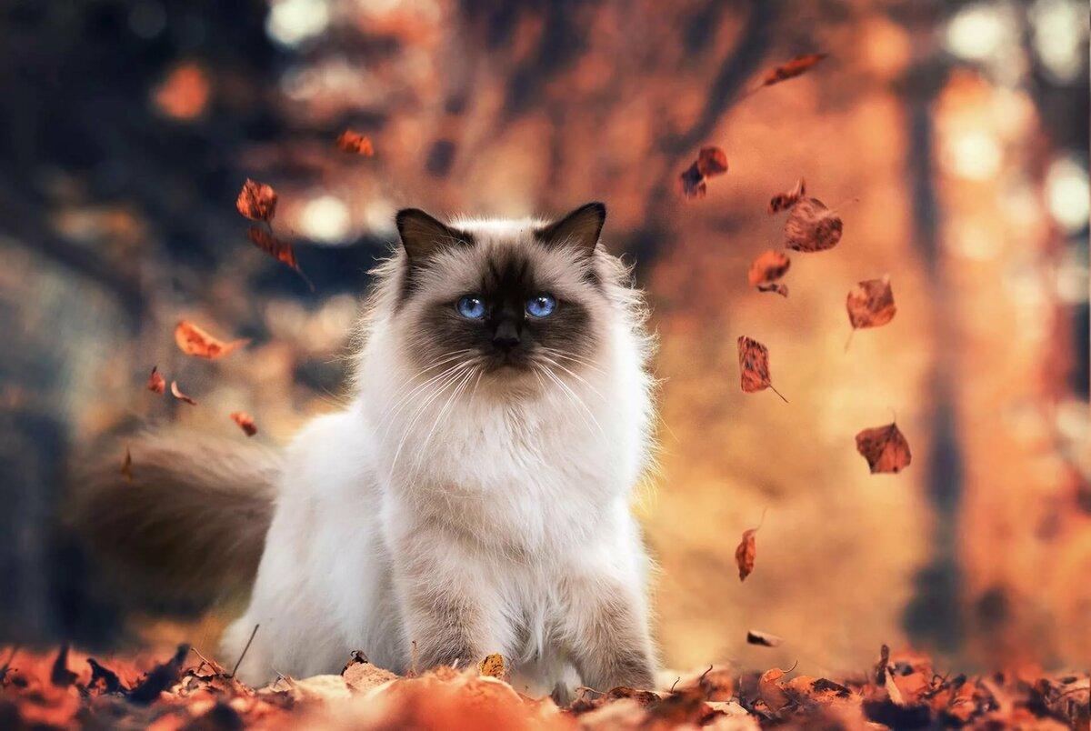 Картинки с добрым утром природа осень