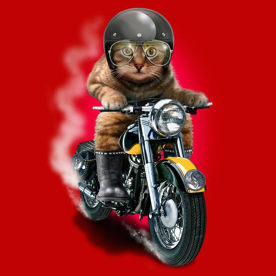 Открытки мотоциклистов, февраля раскраска