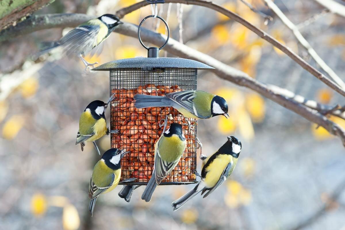 картинка помощь птицам сладкая