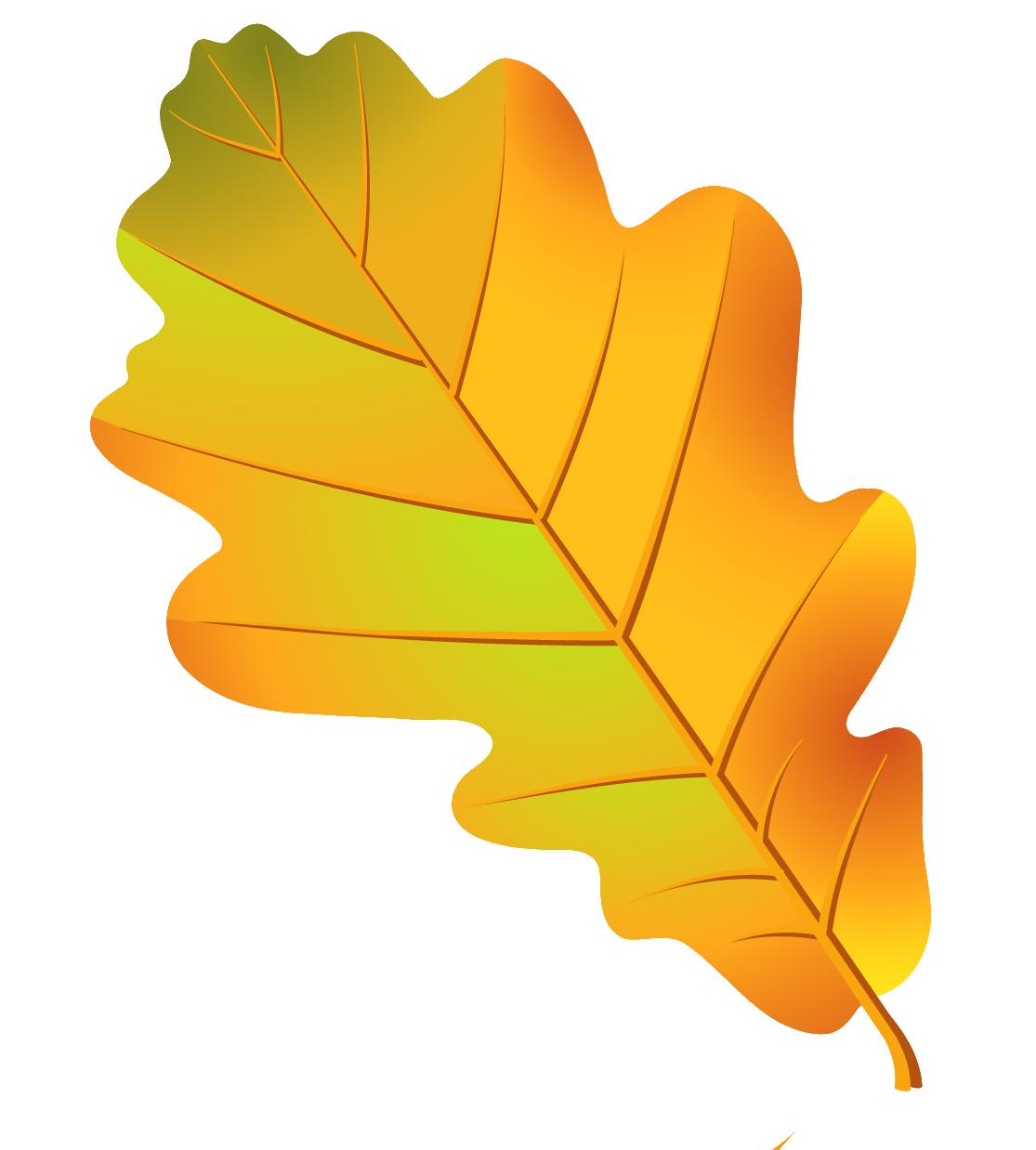 Картинки дубовые листья