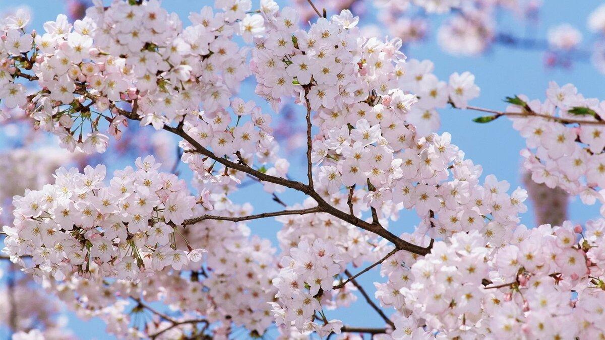 Рождением дочки, картинки красивая весна на рабочий стол