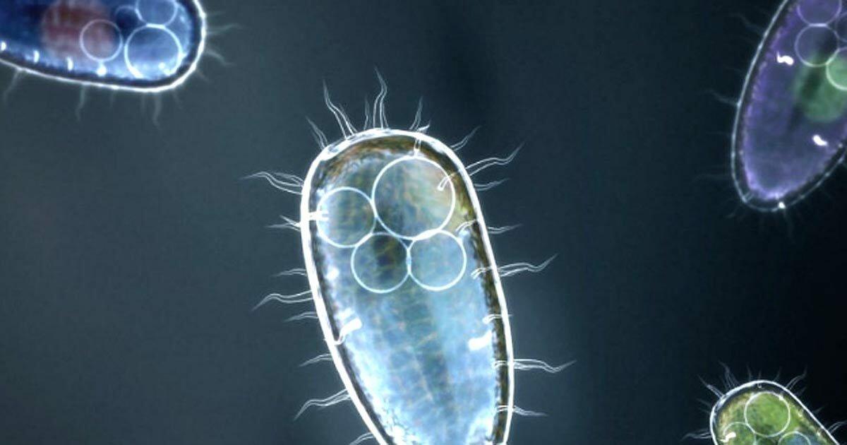 Простейшие картинки организмы