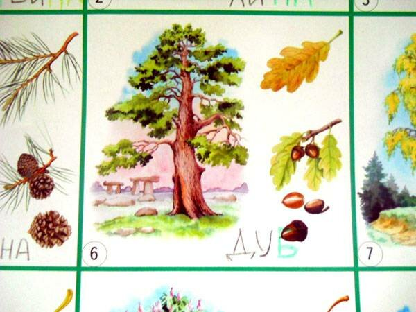 картинки плодов деревьев с названиями
