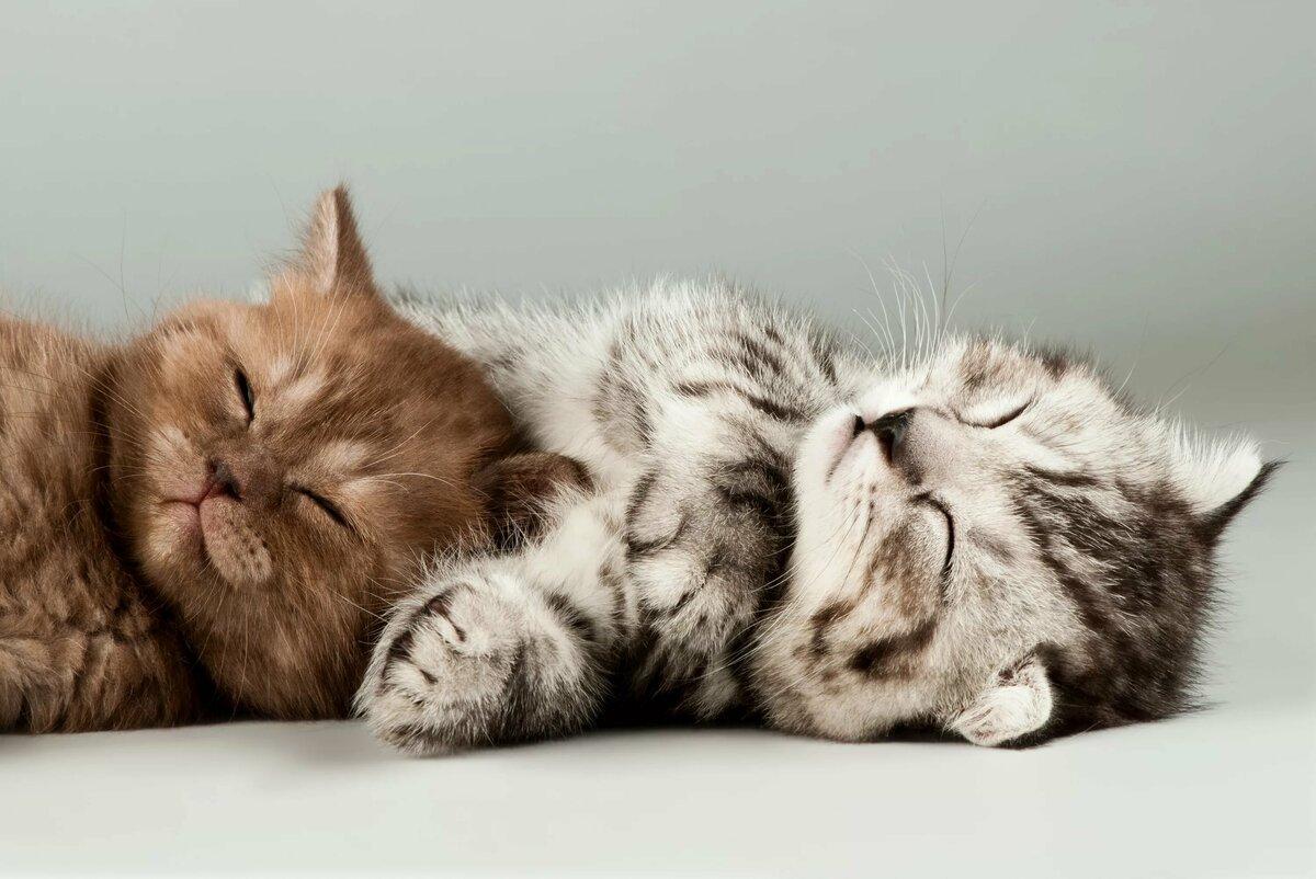 Картинки сонный котенок, картинки девушек