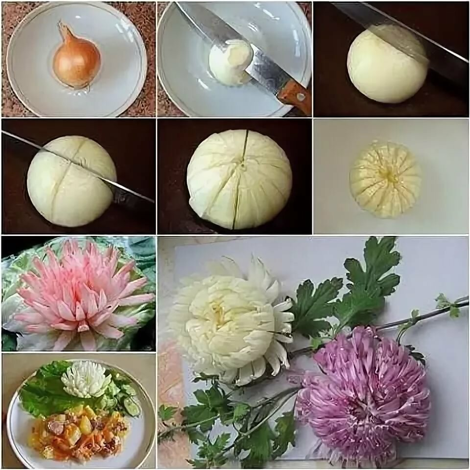 хризантема из луковицы фото знаете