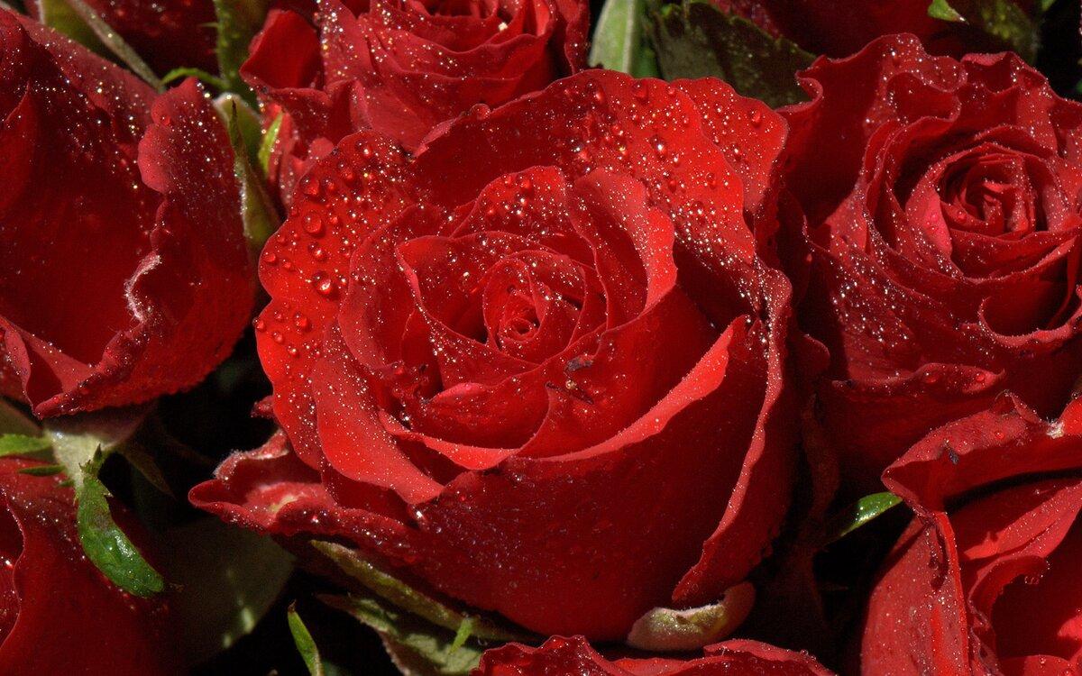 Фото музыкальных открыток или обложек красивые розы, машинок