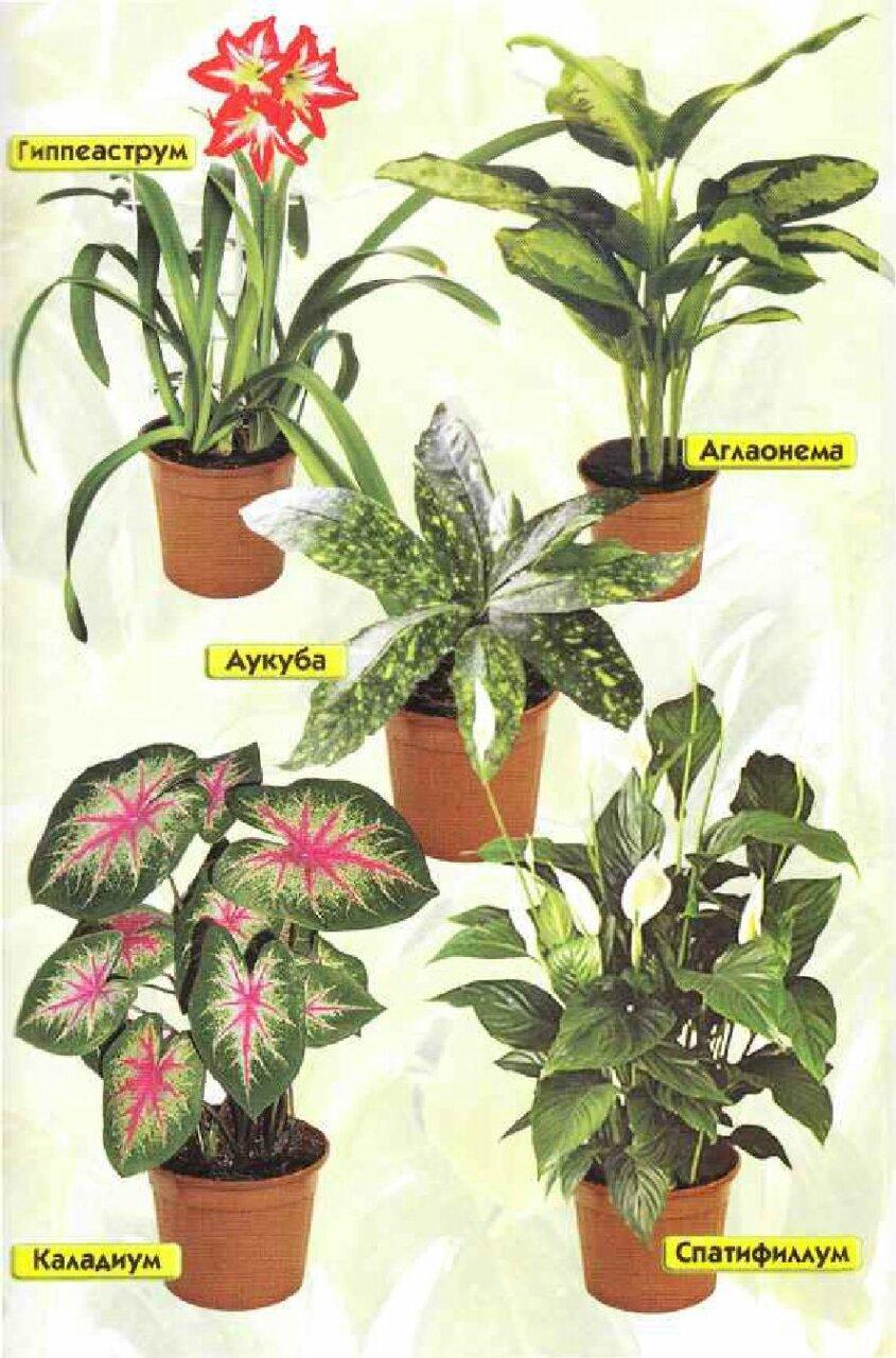 Фото и названия комнатных цветущих цветов