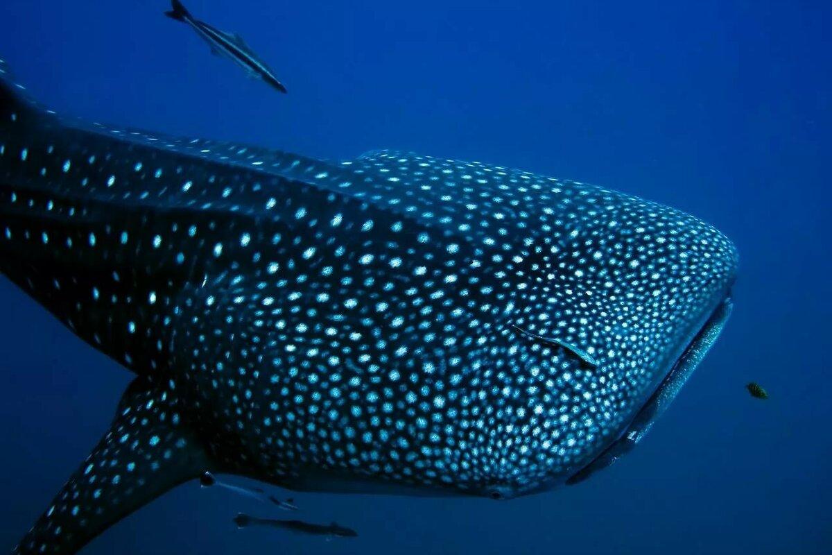 Смотреть картинки всех больших рыб