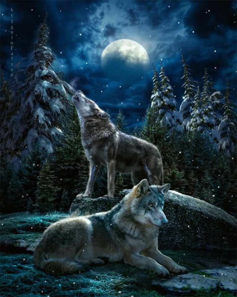 Картинка на телефон волк