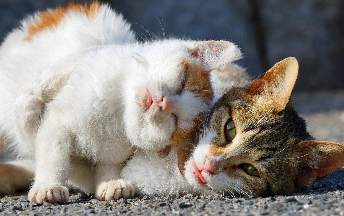 Картинка кис кис коты
