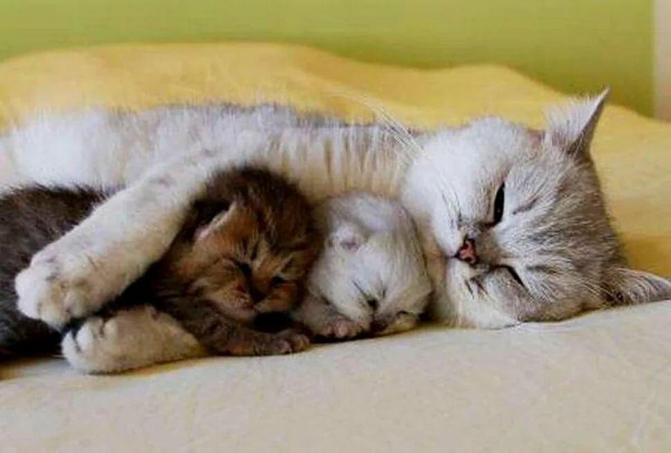 Картинки спокойной ночи с котиками прикольные, крови