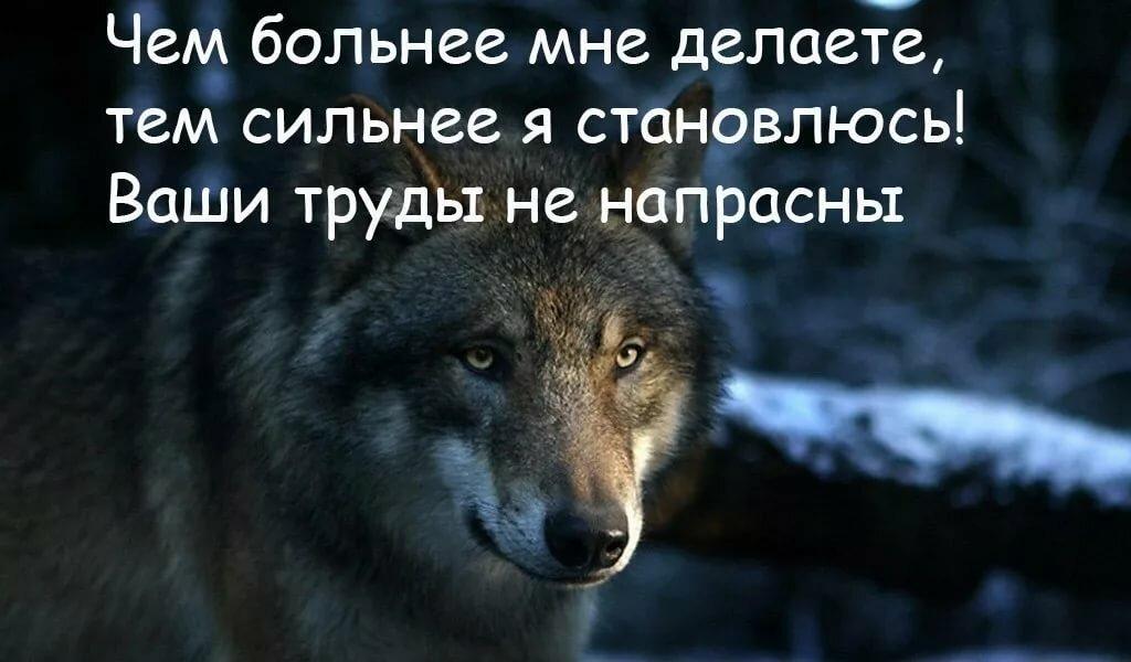 Марта, картинка про волков с надписями со смыслом